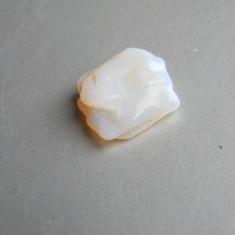 Specimen minerale - OPAL Australia (OP14) - Fosila roca, Naturala