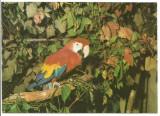 @carte postala(ilustrata)-BUCURESTI-Gradina zoologica -Papagal Ara, Necirculata, Printata