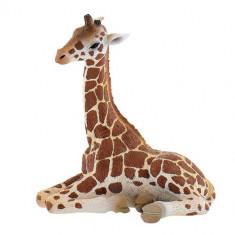 Figurina Pui de Girafa - Figurina Animale Bullyland