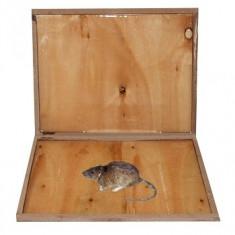 Capcana adeziva anti rozatoare din lemn