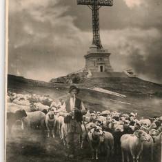 Varful Caraiman - Crucea Eroilor - lot 6 carti postale - interbelice, Necirculata, Fotografie, Romania 1900 - 1950