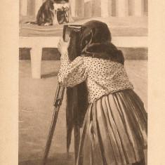 Caini - lot 6 carti postale vechi ( G. Heuer & Kirmse - Germania ), Necirculata, Printata, Europa