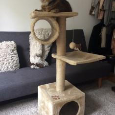 Ansamblu Pisici - Pisica de vanzare