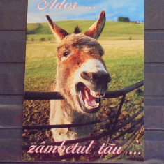 VEDERE HAZLIE - MAGAR ZAMBIND - ADOR... ZAMBETUL TAU - NECIRCULATA, SCRISA. - Carte postala tematica, Fotografie