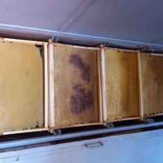 Rame de albine cladite - Apicultura