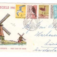 Olanda 1961 - Pasari, FDC circulat