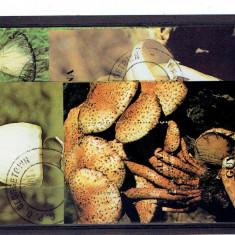 Guyana - ciuperci 1990 blocke - Timbre straine, Flora, Stampilat