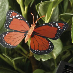 Decoratiuni de gradina : Iata cum zboara fluturii!