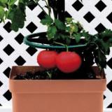 Vas special cu tije pentru plante