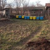 Vand 9 familii albine cu stupi