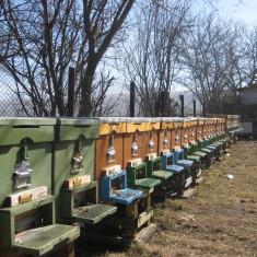 Familii de albine sănătoase - Apicultura