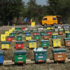 Stupi populați - cu familii de albine sanătoase, cu tratamente la zi - Apicultura