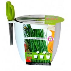 Kit pentru Cultivare Chives (Arpagic) cu Foarfeca - ALB, Buzzy Seeds