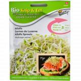 Seminte de Lucerna (Alfalfa) pentru Germinat Ecologic/BIO, Buzzy Seeds