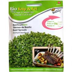 Seminte de Busuioc pentru Germinat Ecologic/BIO, Buzzy Seeds