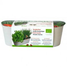 Kit Jardiniera Chives si Coriandru Ecologic/BIO, Buzzy Seeds