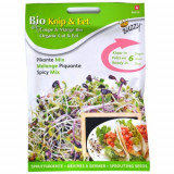 Seminte Mix Picant pentru Germinat Ecologic/BIO, Buzzy Seeds