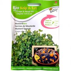 Seminte de Mustar pentru Germinat Ecologic/BIO, Buzzy Seeds
