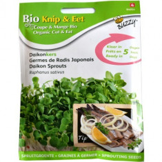 Seminte de Ridiche Japoneza (Daikon) pentru Germinat Ecologic/BIO, Buzzy Seeds