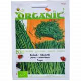 Seminte de Chives pentru Cultivare Ecologic/BIO, Buzzy Seeds