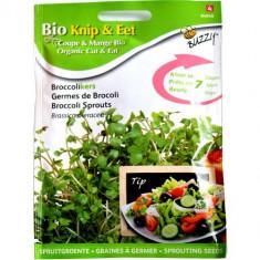 Seminte de Brocoli pentru Germinat Ecologic/BIO, Buzzy Seeds