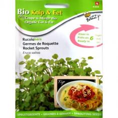 Seminte de Rucola pentru Germinat Ecologic/BIO, Buzzy Seeds