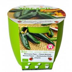 Kit Cultivare Ardei Mexican Jalapeno Ecologic/Bio, Buzzy Seeds