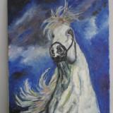 Cadoul ideal! Cal alb 1-pictura ulei pe panza;MacedonLuiza - Pictor roman, Animale, Impresionism