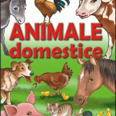 Animale domestice - 3998 - Carte de povesti
