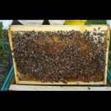 10 familii albine. - Apicultura