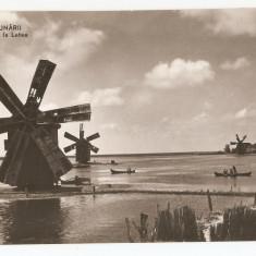 DELTA DUNARII - MORI DE VANT - Carte Postala Dobrogea dupa 1918, Necirculata, Fotografie
