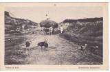 #2110- Romania, c.p. militar circulata 1917: Folklor, Vedere la tara, Muntenia?