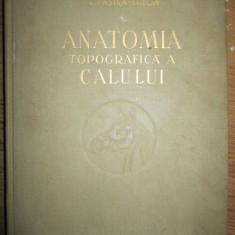 Anatomia topografica a calului - Carte Zoologie