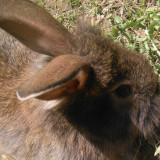 Vand iepuri !