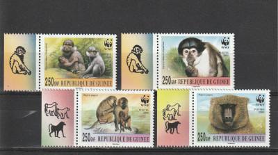 Fauna WWF maimute Rep Guineea. foto