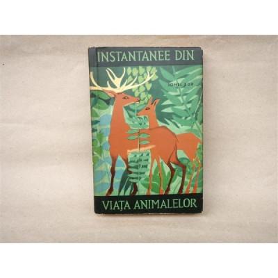Instantanee din viata animalelor , Ionel Pop , 1964 foto