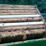 Vand 10 familii de albine - Apicultura