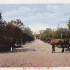 BUZAU, VEDERE DIN CRANG, TRASURA - Carte Postala Muntenia dupa 1918, Necirculata, Printata