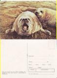 Ilustrata animale- Foca, Necirculata, Printata