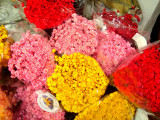 Plante naturale uscate - Imortele glixia - diverse culori