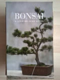Bonsai A Step-By-Step Guide