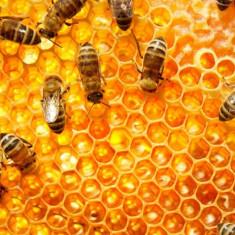 Ofer familii de albine pe rame de 3/4 pentru polenizare la 65 ron