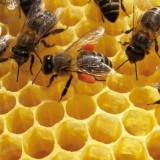 Vand familii de albine pe rame de 3/4 - Apicultura