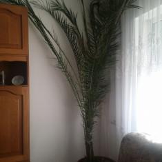 Vand palmier - Palmieri