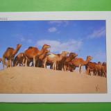 HOPCT 29561 TUNISIA CAMILE PE DUNELE DE NISIP -CIRCULATA, Printata