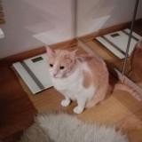 Donez 3 pisici simpatice