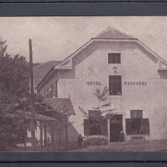 BUZIAS BAILE BUZIAS HOTEL MUSCHONG - Carte Postala Banat dupa 1918, Necirculata, Printata