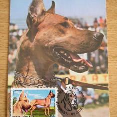 MXM - CAINI - DOG GERMAN GALBEN - PRIMA ZI A EMISIUNII - BUCURESTI 1990, Romania de la 1950, Fauna