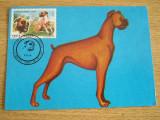 MXM - CAINI - BOXER - EXPOZITIA CANINA - CLUJ NAPOCA 1992, Romania de la 1950, Fauna
