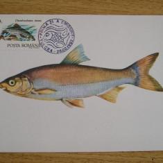 MXM - PESTI - SCOBARUL - PRIMA ZI A EMISIUNII - TULCEA 1992, Romania de la 1950, An: 1995, Fauna
